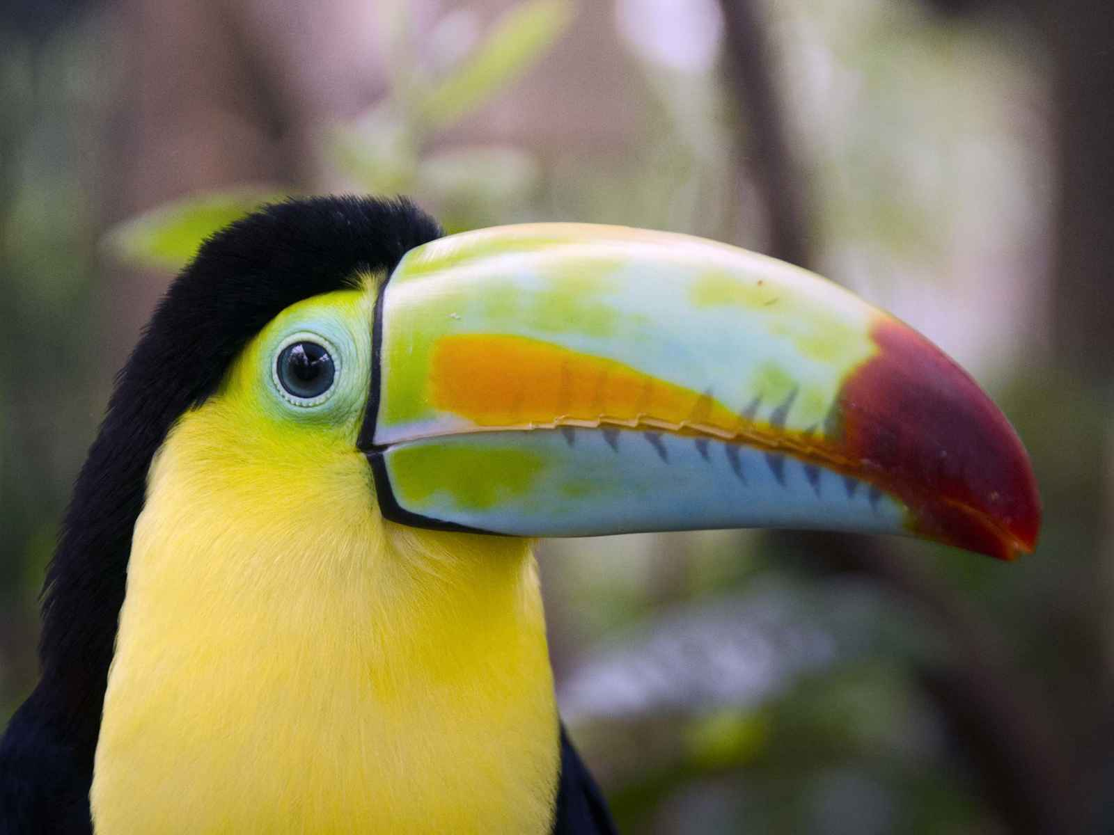 Costa Rica - Circuit Paradis Sauvages et extension Mer des Caraïbes