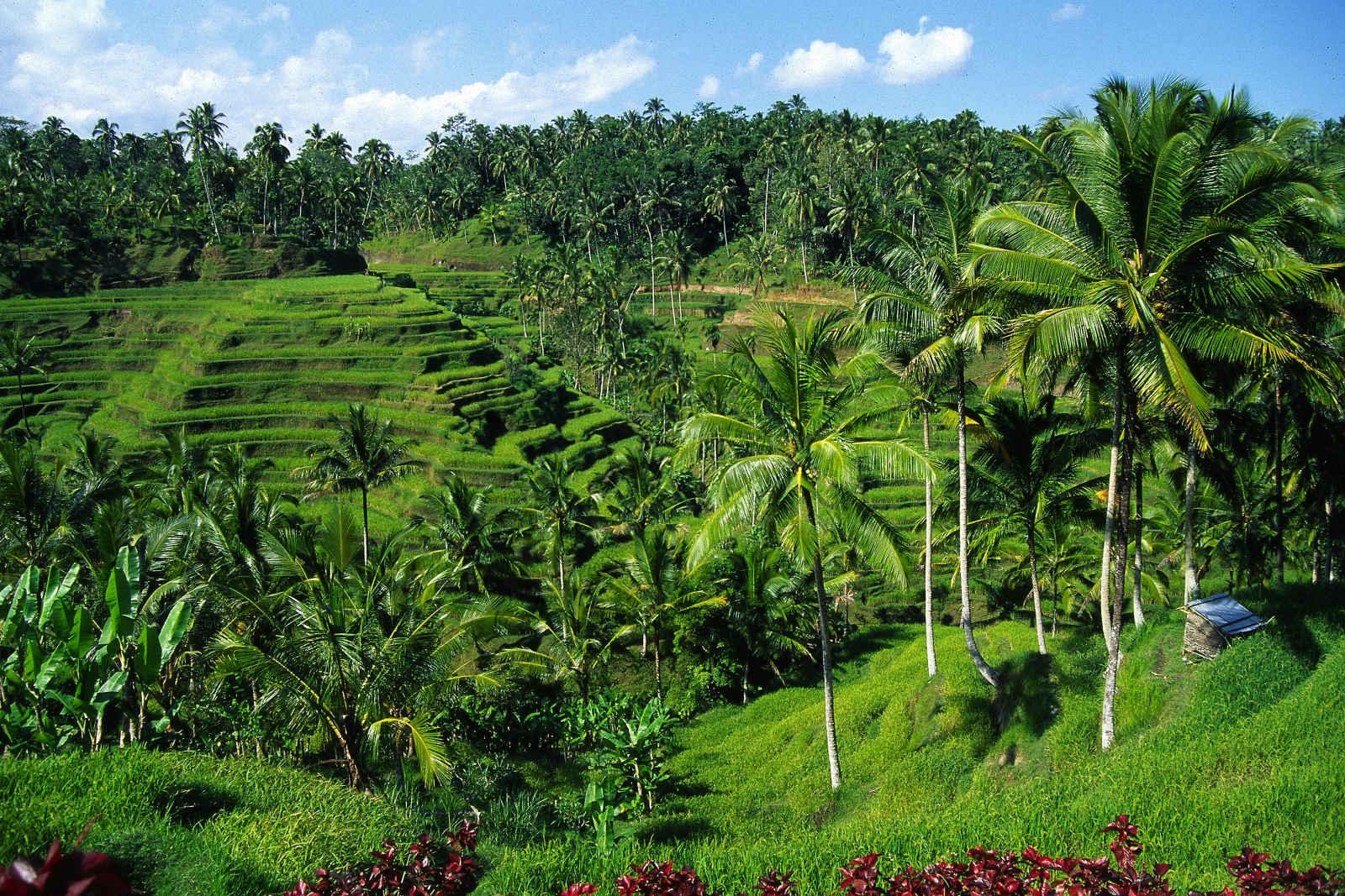 Bali, île divine