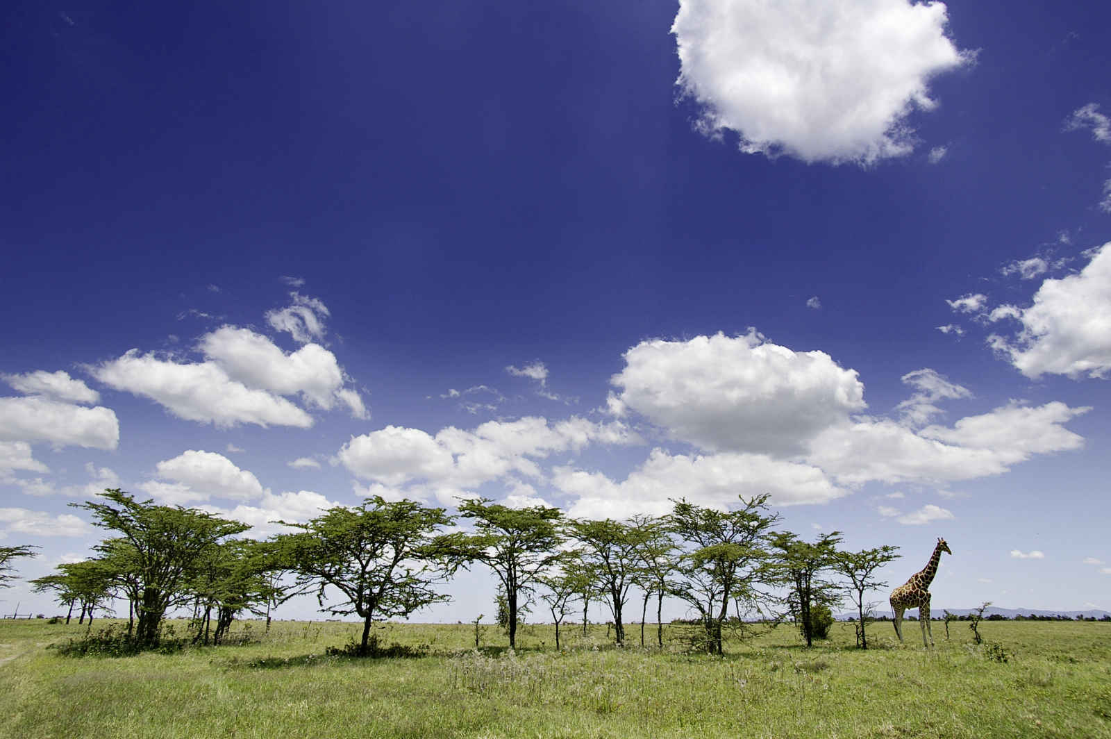 Souvenirs du Kilimandjaro + Extension à Mombasa
