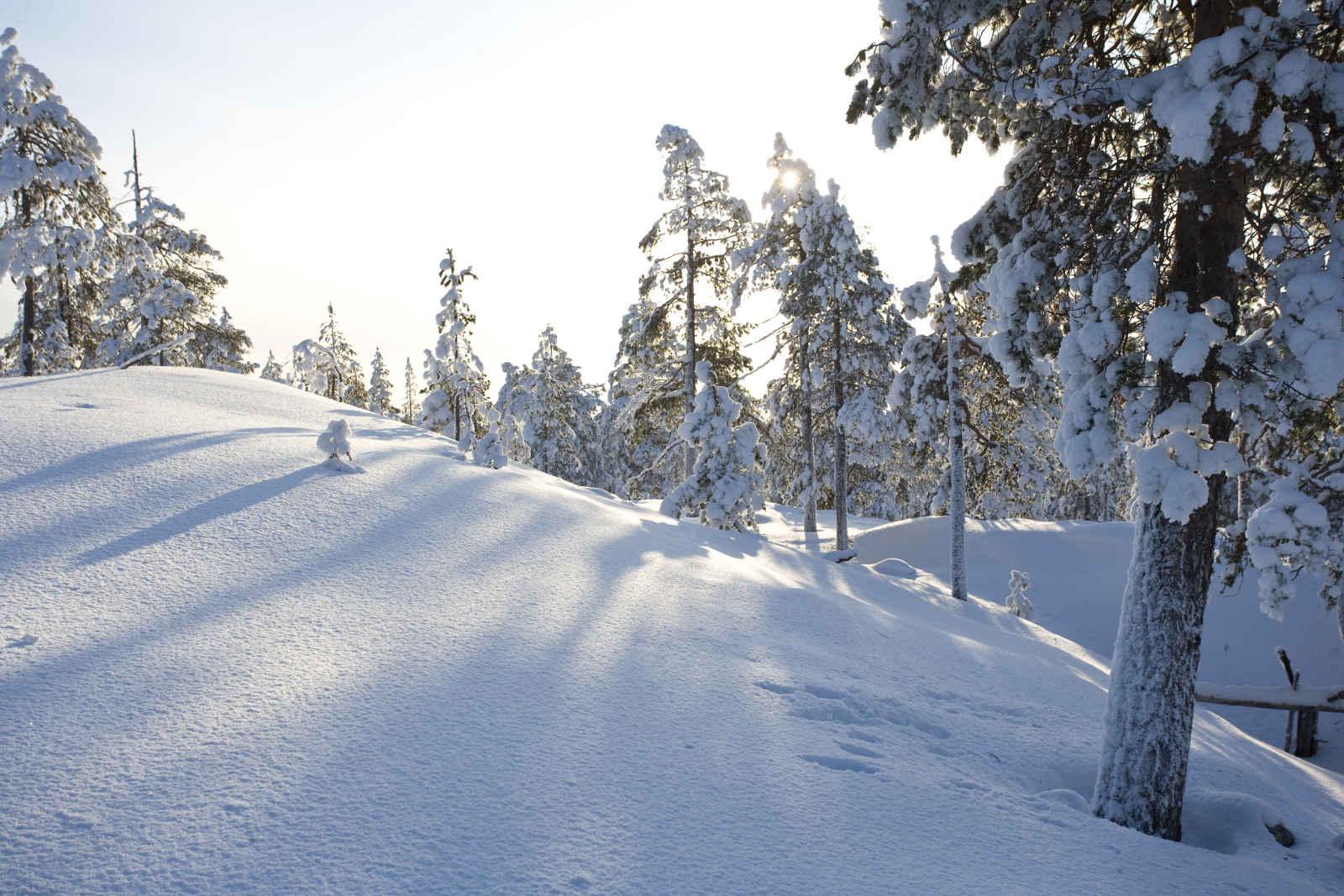 Finlande - Laponie - Rovaniemi - Ounasvaara Chalets