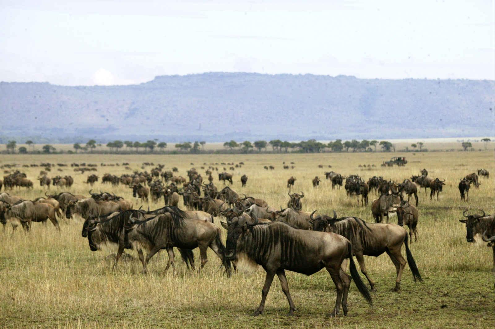 Safari dik dik