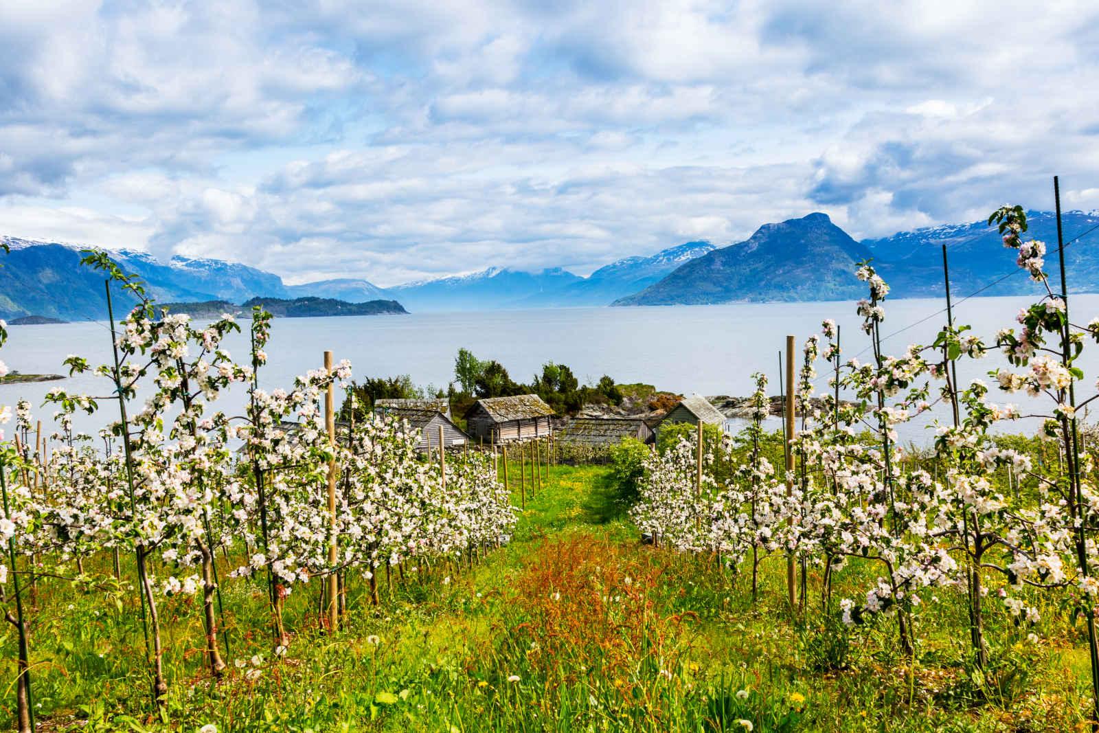 Séjour Norvège - Autotour Au pays des fjords