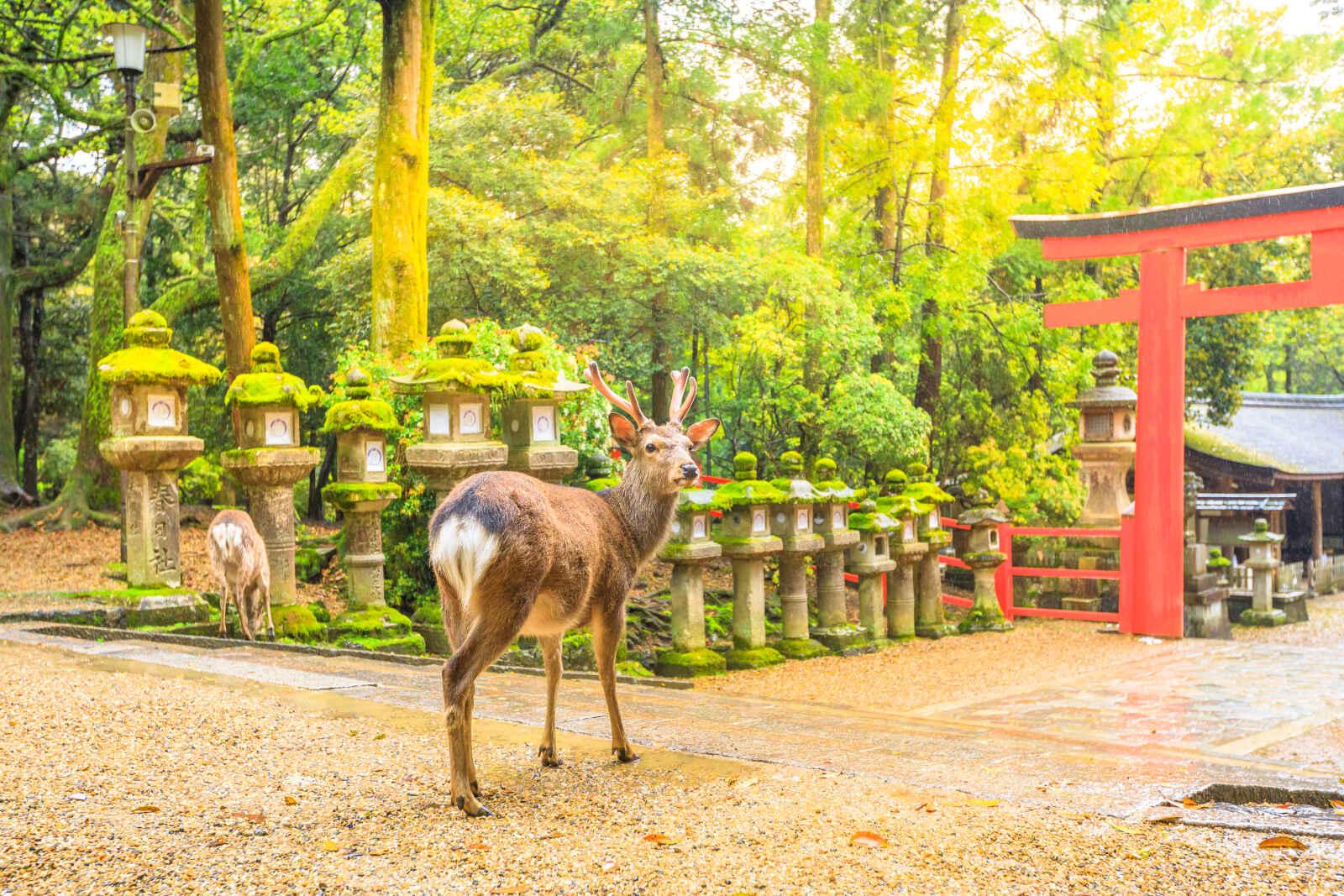 Séjour Japon - Au pays du soleil levant
